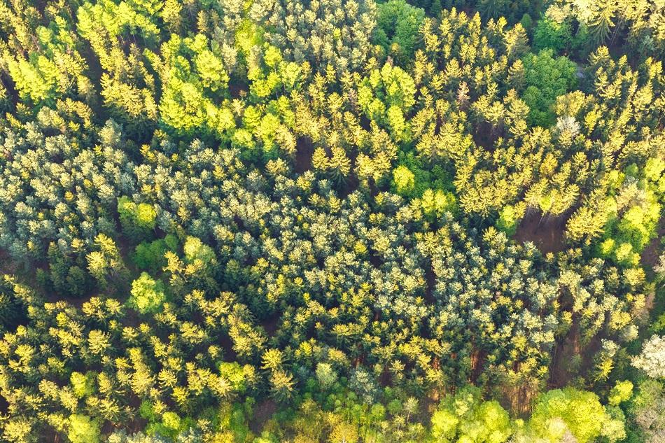 أشجار من أعلى