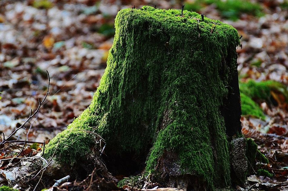 جذع شجرة مقطوع عليه أعشاب
