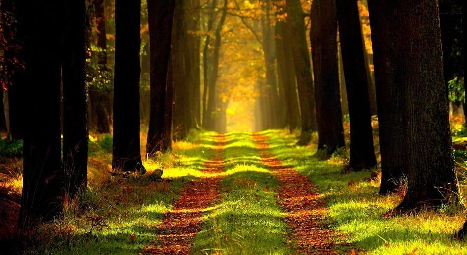 طريق طبيعي يمتد بين الأشجار في غابة