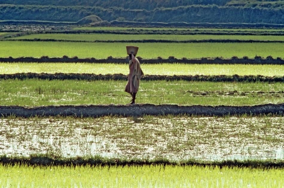 امرأة إفريقية تمشي في الحقول وهي تحمل المحصول على رأسها