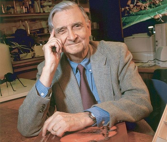 عالم الأحياء التطورية إدوارد ويلسون