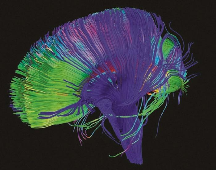 مسارات الرسائل العصبية في المخ